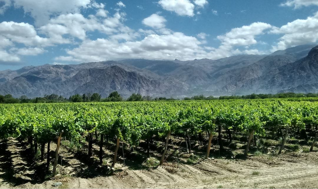 Wine Regions of the World – Argentina