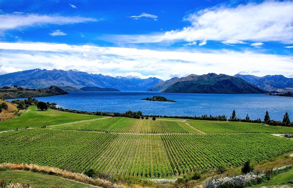 Wine Regions of the World – New Zealand