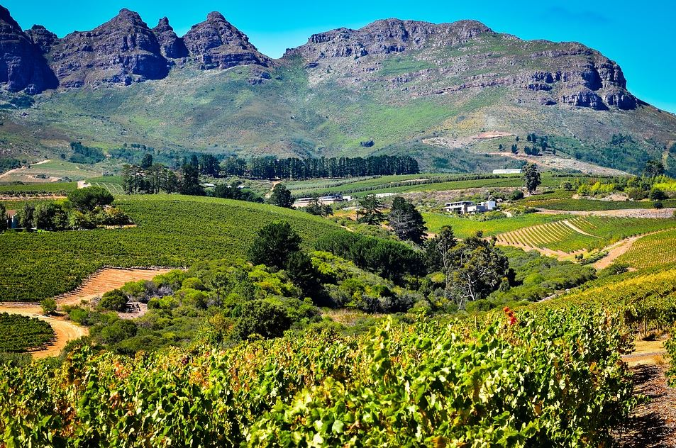 Wine Regions of the World – South Africa