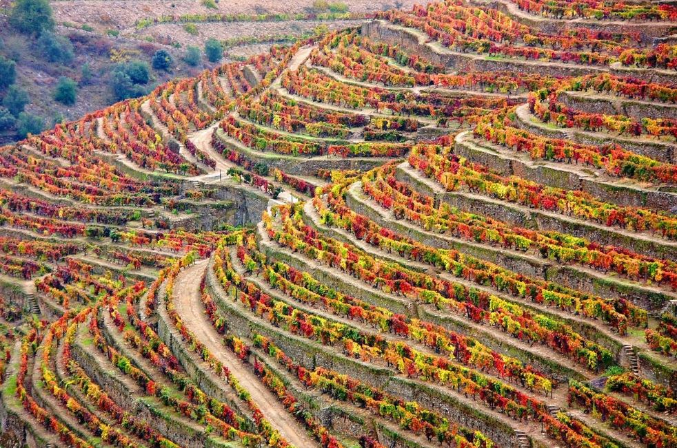 Wine Regions of the World – Portugal