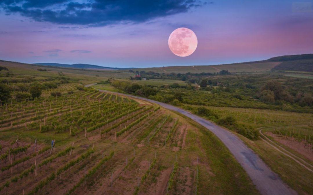 Wine Regions of the World – Hungary
